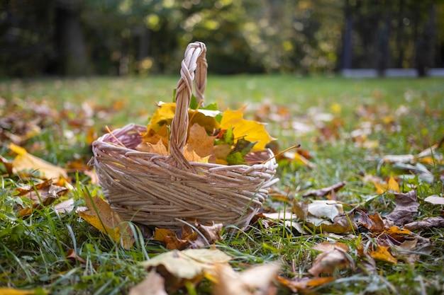 Mand met esdoornbladeren in het herfstbos.