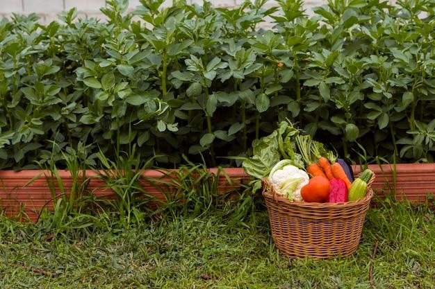 Mand met groenten in de tuin