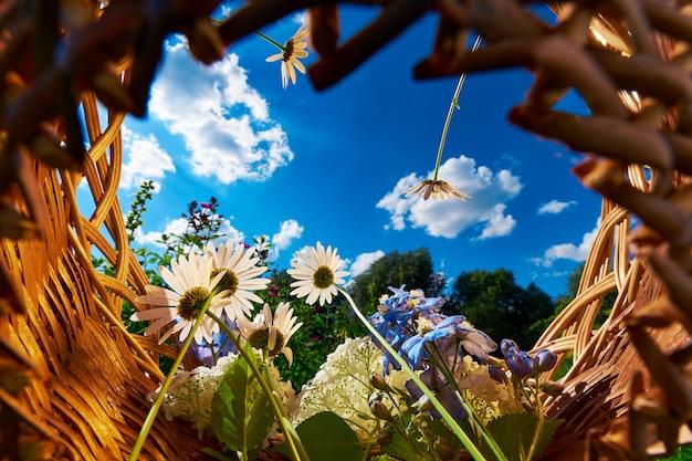 Mand met kamille en hortensia bloemen tegen een blauwe hemel met wolken