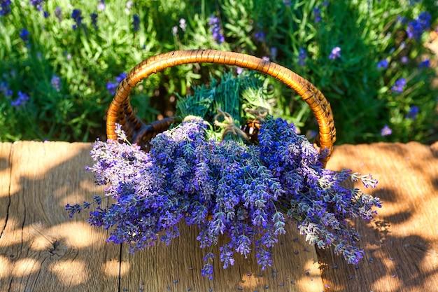 Mand met lavendelboeket op houten tafel, op lavendelveldachtergrond