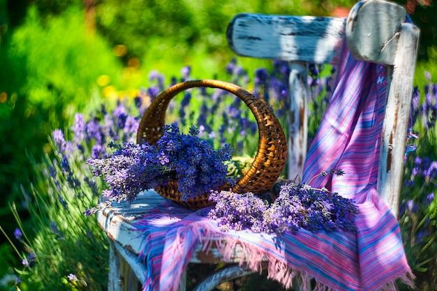 Mand met lavendelboeket op vintage stoel, op lavendelveldachtergrond