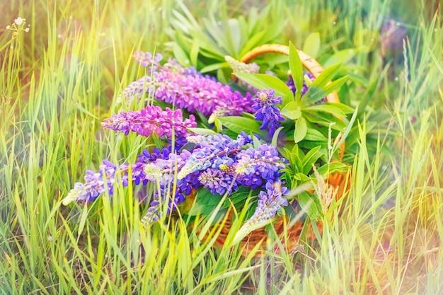 Mand met lupine bloemen