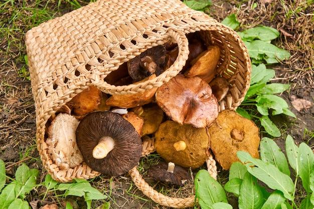 Mand vol met grote champignons op groene bosgrond.