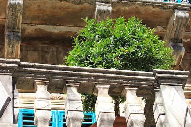 Mandarijnboom in oud antic balkon op montenegro, europa.
