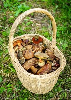 Mandje met vers geplukte champignons