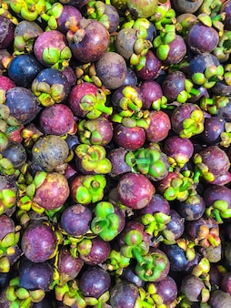 Mangisboom