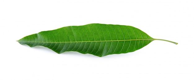 Mangoblad op een witte achtergrond