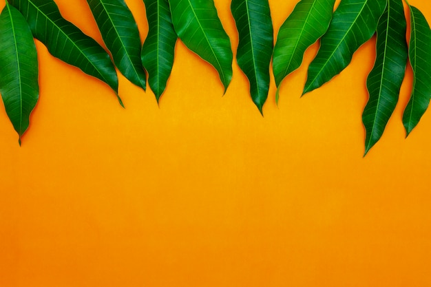 Mangobladeren op kleurrijke document achtergrond