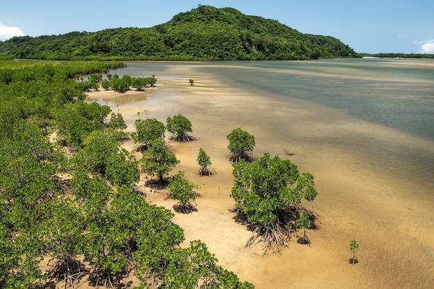 Mangrove bij uraguchi-rivier, iriomote-eiland, yaeyama, okinawa, japan.