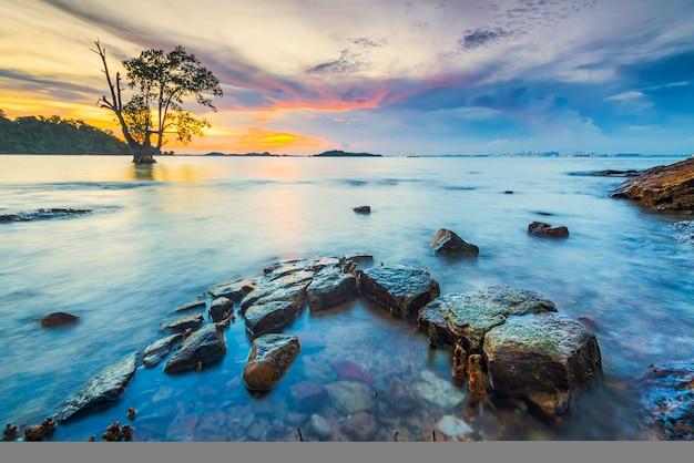 Mangrovebomen en koraal bij tanjung pinggir beach op batam island bij zonsondergang