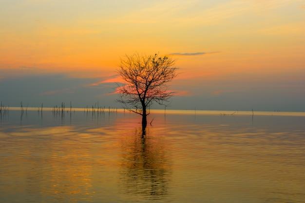 Mangrovebomen in meer met kleurrijke hemel op zonsopgang bij pakpra-dorp, phatthalung, thailand