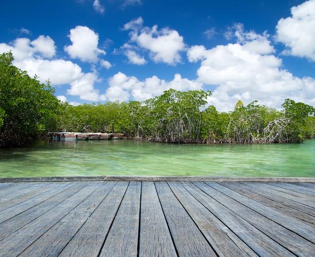 Mangrovebomen in zee