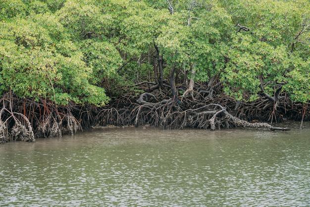 Mangrovebos, groen gebladerte boven de waterlijn en wortels met onderwaterleven in de zee, braziliaanse zee