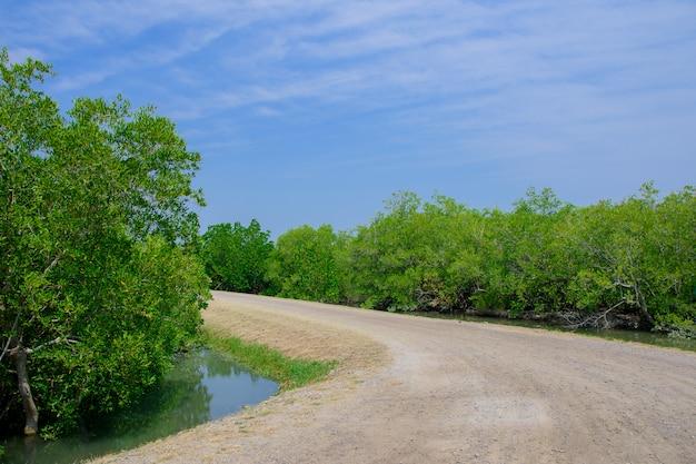 Mangroven groeien in ondiepe lagune.