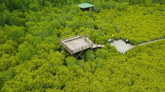 Mangroven intung prong thong of golden mangrove field at estuary pra sae, rayong, thailand