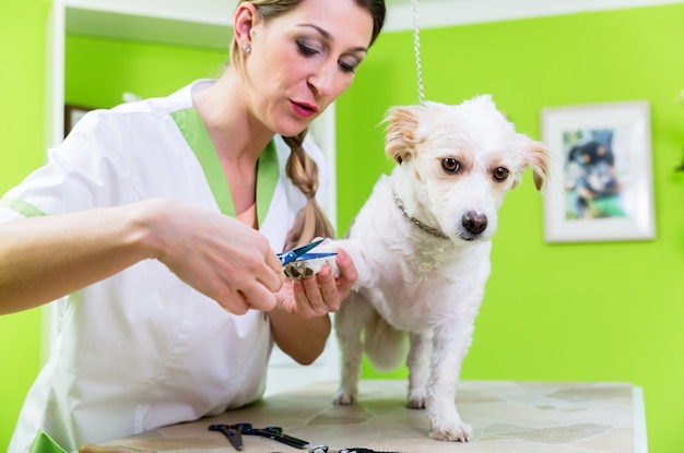 Manicure voor hond in gezelschapsdierensalon