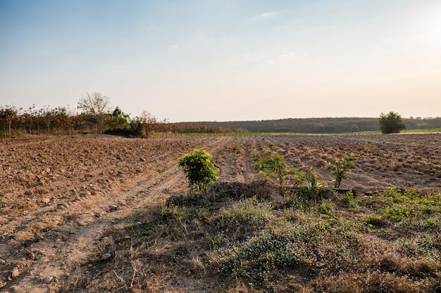 Maniokaanplanting met rijpatroon in thailand