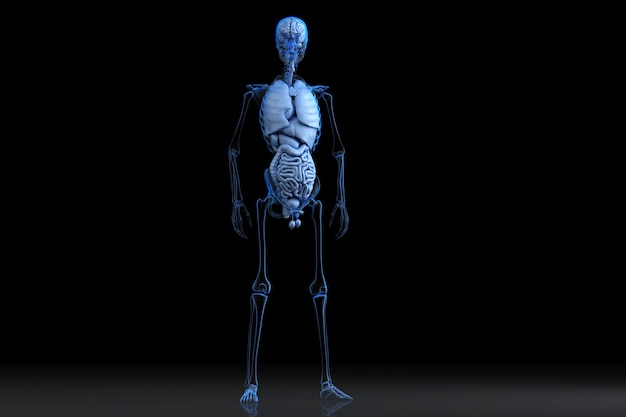 Mannelijke anatomie