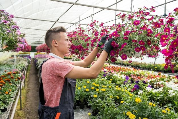 Mannelijke bloemist werkt met bloeiende bloemen en andere planten in broeikas