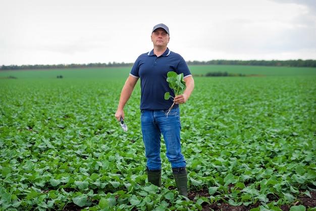 Mannelijke boer in het veld zorg voor gewassen