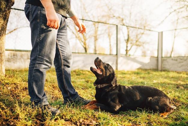 Mannelijke cynoloog met hulphond, die buiten traint. eigenaar met zijn gehoorzame huisdier buiten, bloedhond huisdier