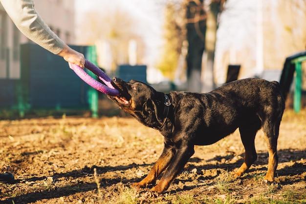 Mannelijke cynoloog, politieagent hond training buiten. eigenaar met zijn gehoorzame huisdier buiten, bloedhond huisdier