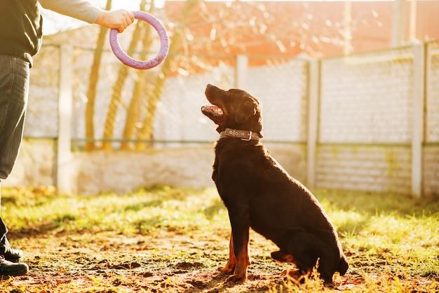 Mannelijke cynoloog werken met getrainde politiehond, training buiten. eigenaar met zijn gehoorzame huisdier buiten, bloedhond huisdier