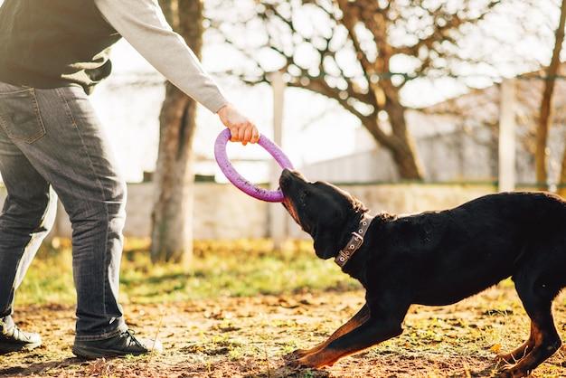 Mannelijke cynoloog werkt met getrainde politiehond