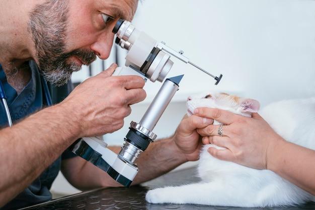 Mannelijke dierenarts die een optometriemachine van de gezichtsmaat op een blinde kat gebruiken. oogzorg voor oudere katten.