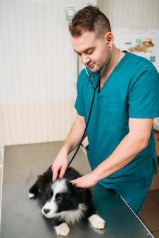 Mannelijke dierenarts onderzoekt hond, veterinaire kliniek. dierenarts, behandel een zieke hond