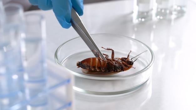 Mannelijke entomoloog die in het laboratorium aan nieuwe soorten werkt