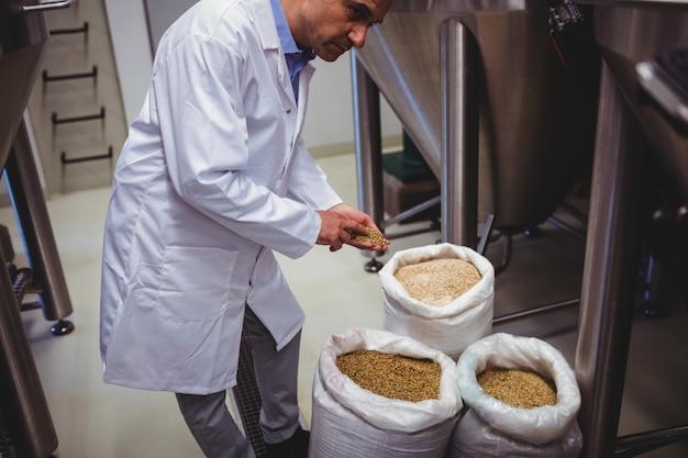 Mannelijke fabrikant die gerst onderzoekt bij brouwerij