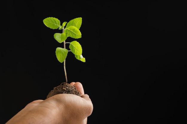 Mannelijke hand met kleine plant op zwarte achtergrond