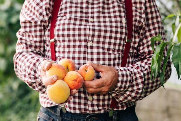 Mannelijke handen houden verschillende verse, mooie perzikvruchten in de handpalmen op zonnige dag, perzikfruitvruchten rijpen