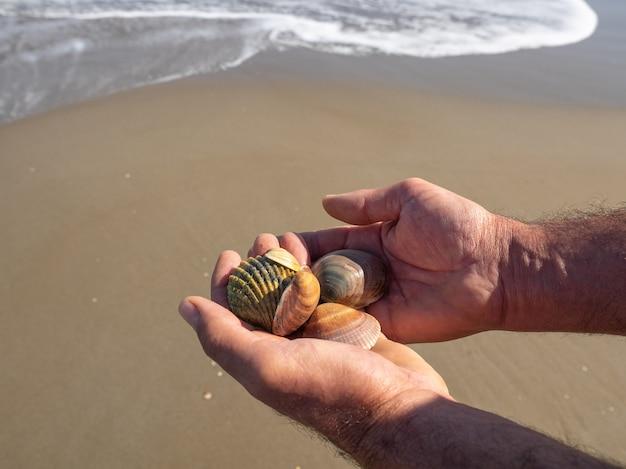 Mannelijke handen met schelpen op licht zand. natuurlijk strandconcept.