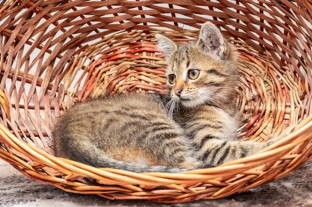 Mannelijke kitten zitten in een rieten mand. interessante dieren