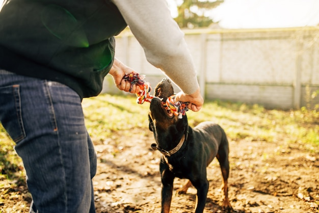 Mannelijke kynoloog werkt met hulphond, buiten trainen. eigenaar met zijn gehoorzame huisdier buiten, bloedhond huisdier