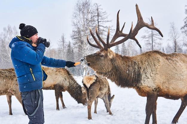 Mannelijke natuurfotograaf bereidt zich voor om een foto van een hert te maken door hem met wortelen te lokken