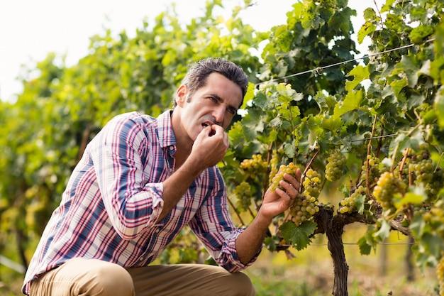 Mannelijke wijnhandelaar die druiven eet
