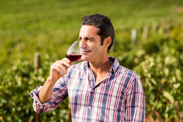 Mannelijke wijnhandelaar die wijn heeft