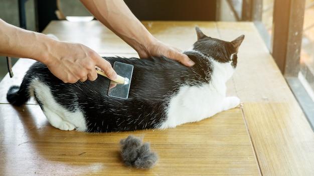 Mannen borstelen een haar van een zwart-witte kat.