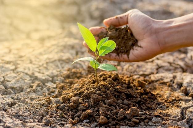 Mannen hand planten zaailingen in de grond.