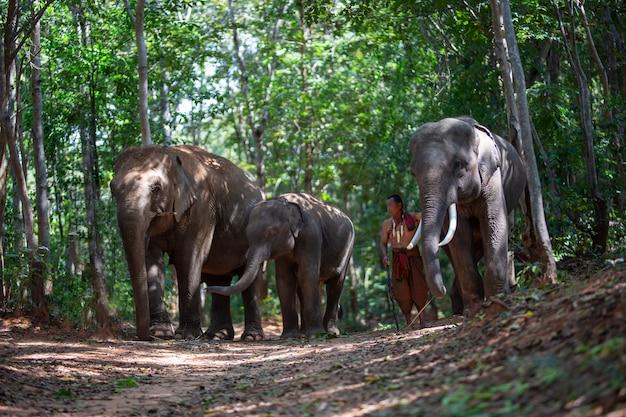 Mannen in klederdracht en olifant zitten in bos