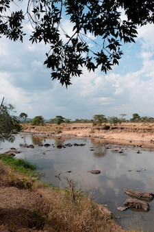 Mara river in kenia