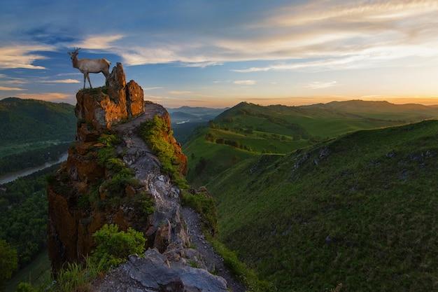 Maral op schoonheid zonsopgang op de top
