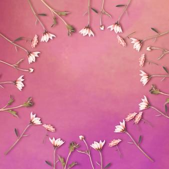 Margarita-bloemen in cirkelvorm op purpere achtergrond met exemplaarruimte, bloemachtergrond, gelukkige valentijnsdag, moederdag, plat leggen, bovenaanzicht