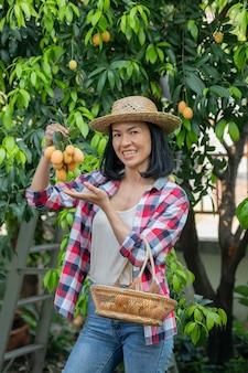 Marian pruim, marian mango of plango (mayongchit in het thais) het oogstseizoen duurt van februari tot maart. hand van vrouw landbouwkundige met een bos van weet gele marian pruim.