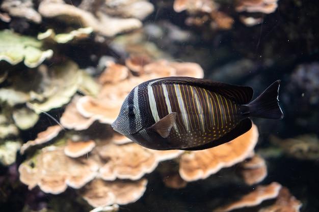 Marien leven, zeevis zwemmen in water met een onderwateromgeving