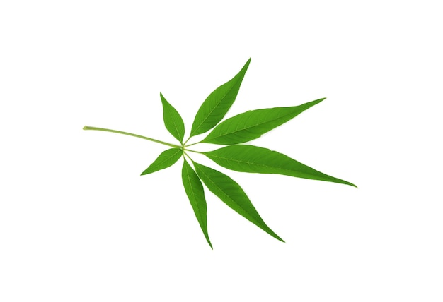 Marihuanablad dat op wit wordt geïsoleerd