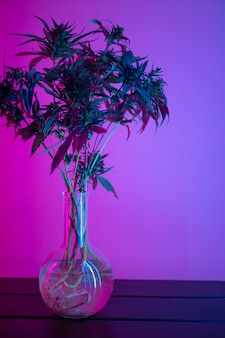 Marihuanastruiken in neon, legaal gebruik van cannabisplanten voor medische doeleinden thuis